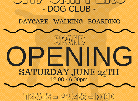 City Sniffers Dog Club Grand Opening!