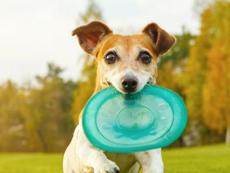 10 Fun Games to Play With Your Dog This Summer!