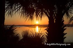 Sunrise through Palms
