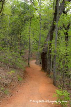 Sawnee Mountain Hiking Trail Spring