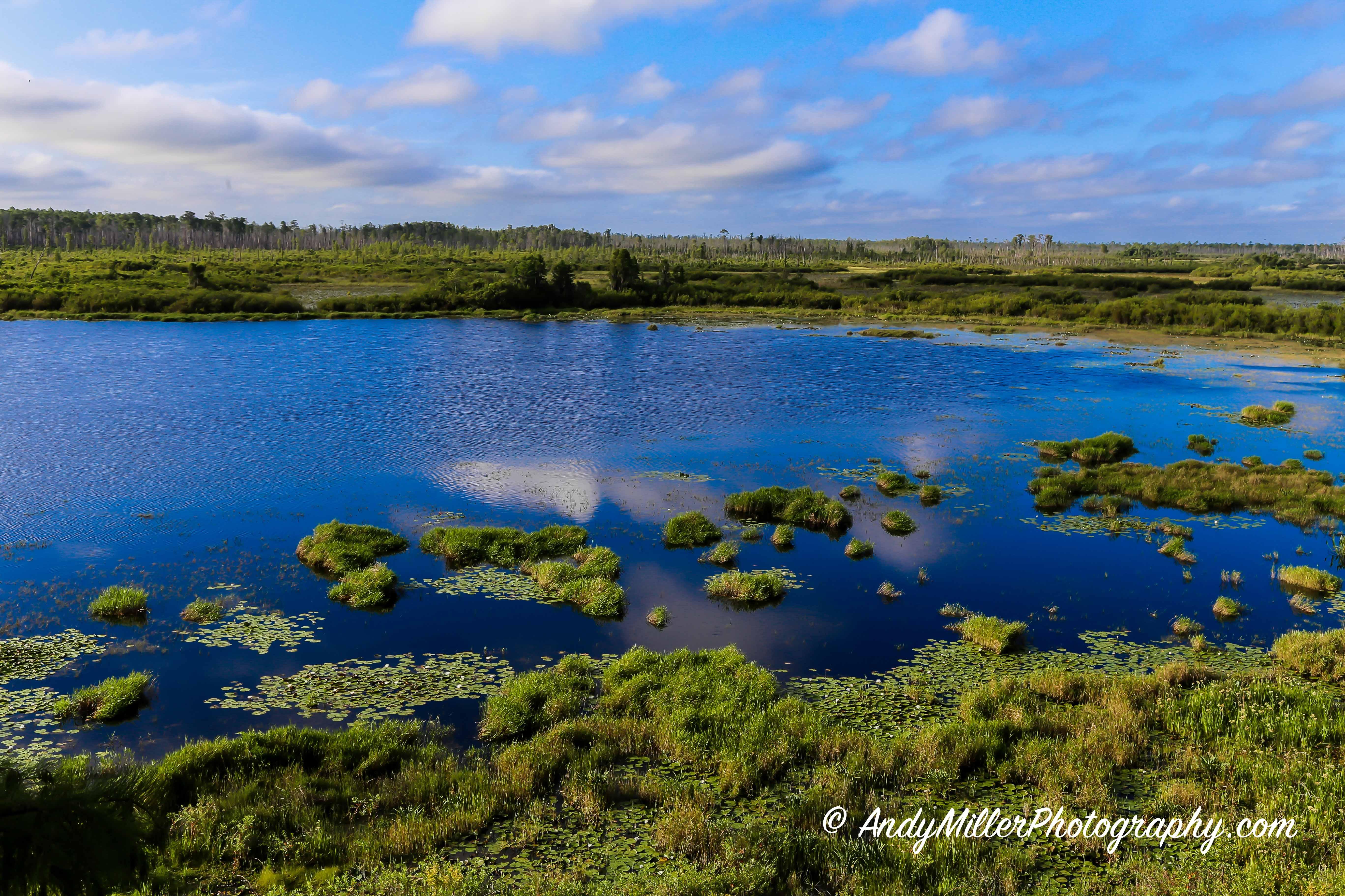 Okefenokee Swamp Bog