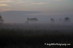 Blackbird shrouded in morning fog