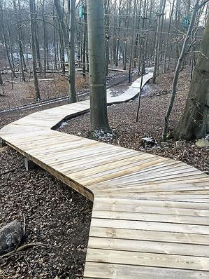 The boardwalk enable visitors to move safely through the woods without disturbing the ground