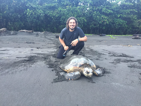An interview with Renato Bruno, Scientific Director of Turtle Love
