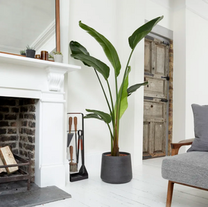 Bird of paradise - Tidy and organised home
