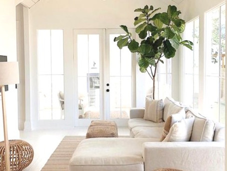 How to choose plants for every room in your home