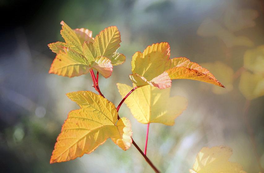 leaves-5717222_1920.jpg