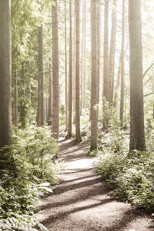 forest pathway small.jpg