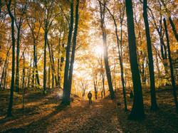 Bushwalk in Forest