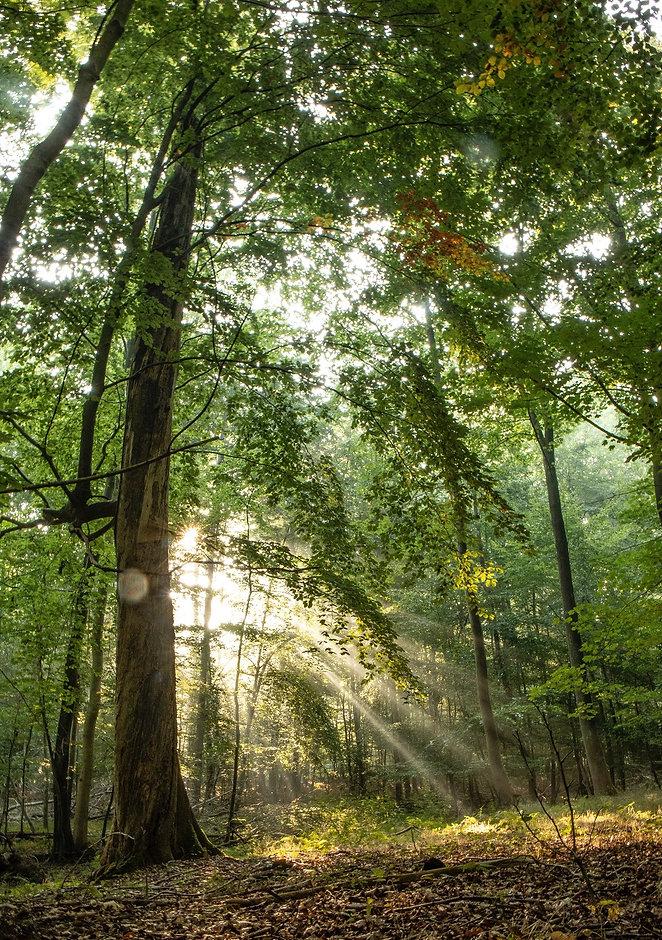 sunlight through trees small