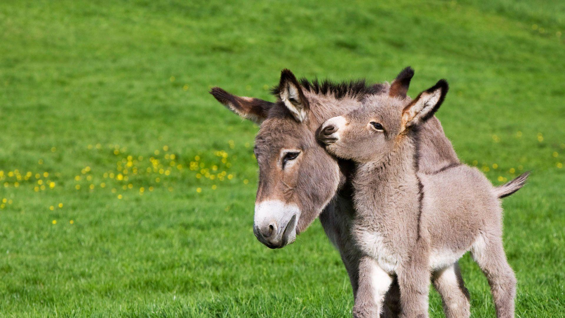 Donkeys_edited