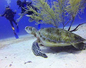 Dykresor till världens bästa dykvatten