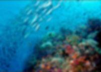 S/Y Fiji Siren, Referral, OWD, Open Water Diver, PADI eLearning, PADI, PADI Touch, Utedyk Thailand, Bali, Filippinerna, Indonesien, Dykcert, Dykcertifikat, Dykskola, Dykcenter, Dykning, Påbörja hemma avsluta utomlands, utedyk Thailand, Utedyk, Ta dykcertifikat i Thailand, Ta dykcert Thailand, Dyksemester