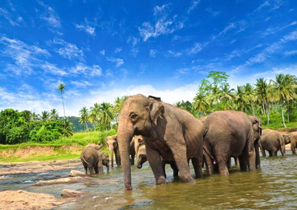 Indiska Oceanien, Sri Lanka, Dykresa till Sri Lanka, Referral Sri Lanka, PADI OWD Sri Lanka, OWD Påbörja hemma avsluta utomlands, Dykresor Sri Lanka, Dykning Sri Lanka, Dykslola Sri Lanka, Dykcenter Sri Lanka, Open Water Diver Sri Lanka, eLearning, PADI Touch, Dyksemester Sri Lanka, Ta Dykcertifikat på Sri Lanka, Safar Sri Lanka, Deep Sea Resort, The Mudhouse,