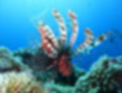Boka dykkurs
