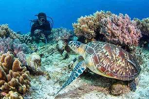 Green_Turtle_at_Apo_IslandRet_Opt.jpg