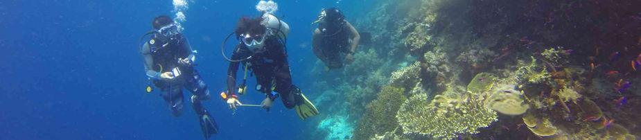 Grundkurs dykning stockholm