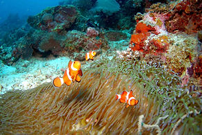 diving_689834_Opt.jpg