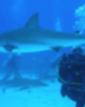 diving_1655740_Opt.jpg
