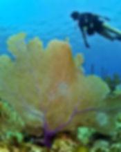 diver_79597_Opt.jpg