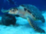 turtle_1702680_Opt.jpg