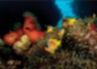 Liveaboard M/Y Dolce Vita, Liveaboard Sudan, Liveaboards Sudan, Advanced Open Water Diver Sudan, Dykresa Sudan, Dykcert Sudan, Dykcertifikat Sudan,  Dykcenter Sudan, Dykning Sudan, Röda Havet Sudan, Dyksemester Sudan, Dykresor Sudan, The Umbria, Conshelf II