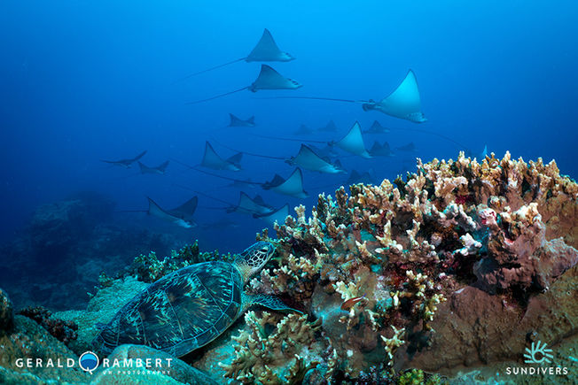 Rays Rockor finns det mycket av på Mauritius