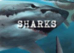 sHARKS banner.jpg