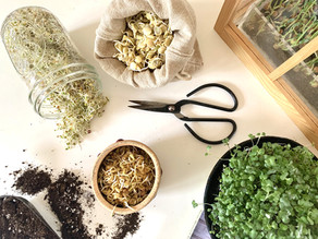Stuck Inside? Learn How to Grow Sprouts and Microgreens Indoors with Permacrafters!