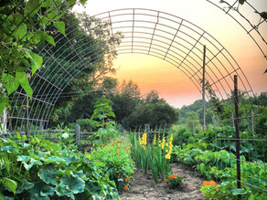 The Ultimate Guide to Growing a Kick Ass Veggie Garden in your Backyard for Beginners