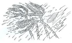 Dall'Etiopia con amore - L'uragano