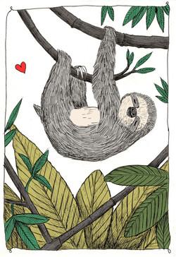 bradipo che dorme