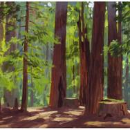 RedwoodsWeb.jpg