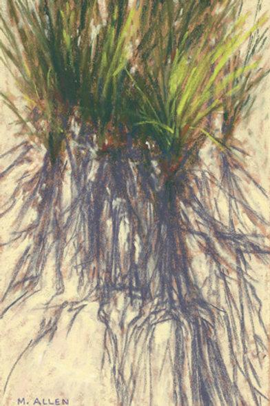 Dune Grass #2