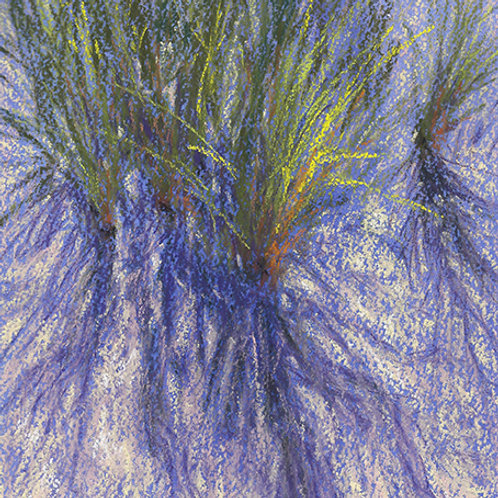 Dune Grass #1