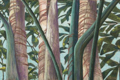 Palm Tree Patterns