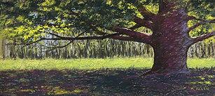 Sunlit Arboretum- 72 dpi.jpg