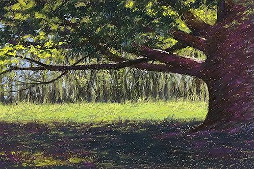 Sunlit Arboretum