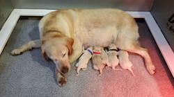 bella pups born