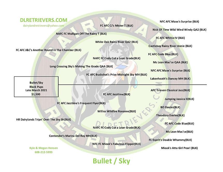 Bullet-SKY-page-001.jpg