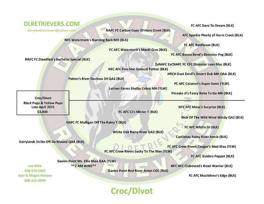 Croc-Divot-page-001 (1).jpg
