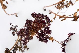 Растения сезонной декоративности. Зима