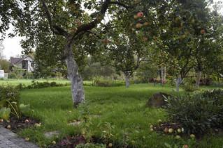 Уход за садом: весенняя обрезка плодовых
