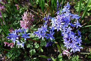 Первоцветы в саду: часть 2