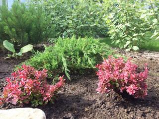 Где купить растения для сада