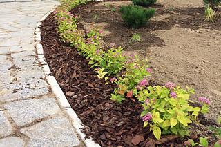 Карликовые растения в дизайне сада. Лиственные.