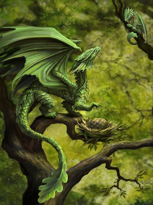 Forest Dragon Postcard