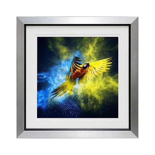 Flying Colours III Framed Wall Art