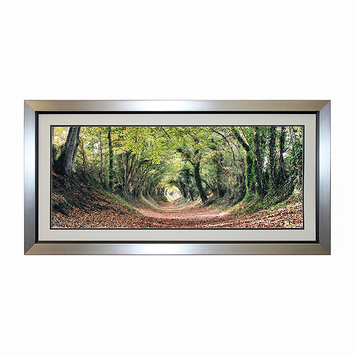 Halnaker Woods Framed Wall Art