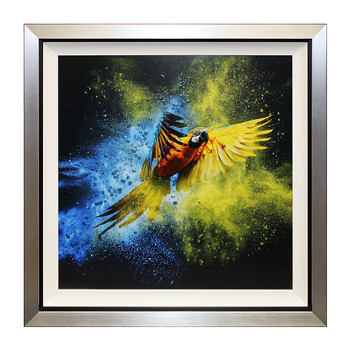 Flying Colours III Liquid Art Framed Wall Art